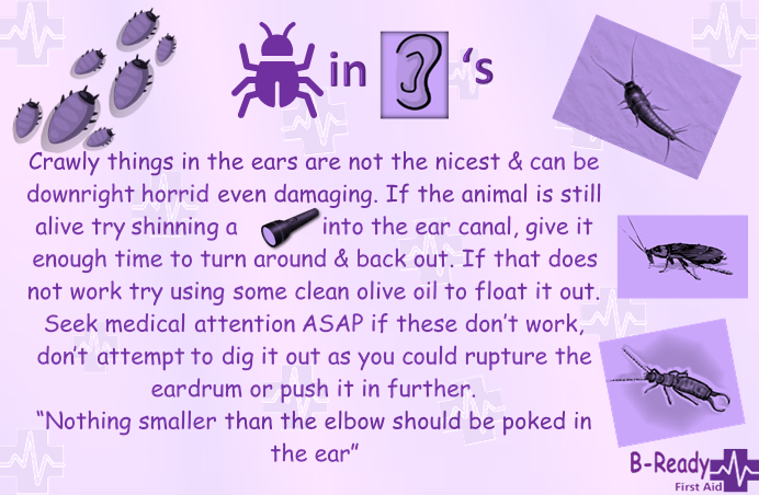 B-Ready First Aid info about insects, bugs in ears