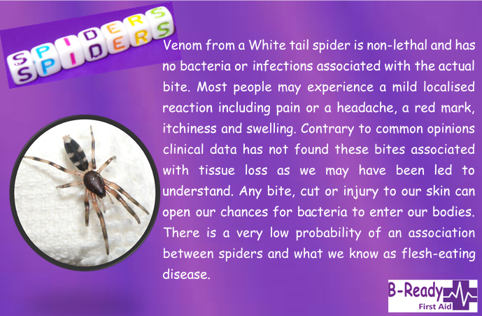 B-Ready First Aid info about white tail spider bites