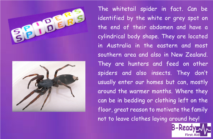 B-Ready First Aid info about white tail spider